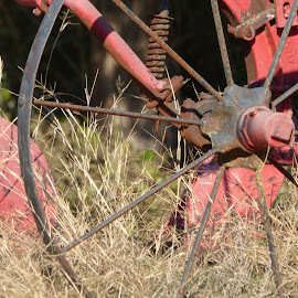 wheel by Nita Andrews - Artistic Objects Other Objects ( old, red, wheel, grass, weeds )