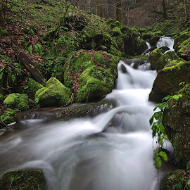 Wondrous forest VI by Zoran Rudec - Landscapes Waterscapes ( waterfall forest moss fern )