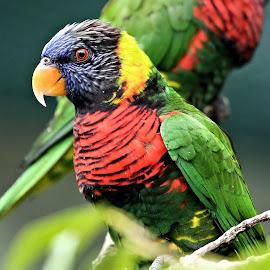 Lowry Park Zoo 6 by Terry Saxby - Animals Birds ( bird, zoo, park, terry, florida, tampa, usa, saxby, nancy, lowry )