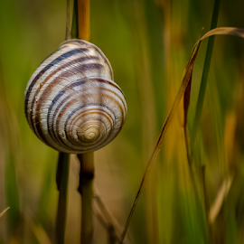 snail on rail by Mihaly Istvan - Animals Other ( grass, rail, meadow, sunlight, snail )