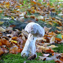 by Patricia Vleeming - Nature Up Close Mushrooms & Fungi (  )