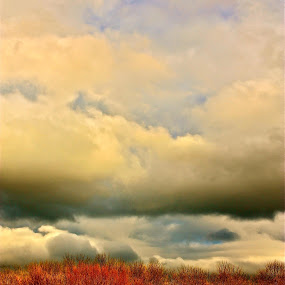 tree tops by Denise Zimmerman - Landscapes Cloud Formations ( clouds, treetops, sky, nature, blue, orange. color, trees, landscape )