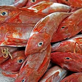 Fish by Michael Moore - Food & Drink Ingredients ( fish,  )
