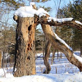 by Jazz Johnson - Nature Up Close Trees & Bushes