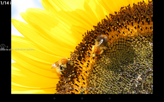 Screenshot of Digital Photo Frame Slideshow