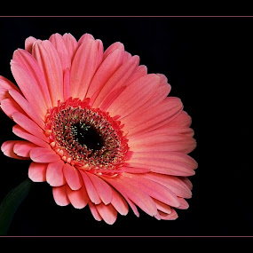 by Irena Klemenčič - Nature Up Close Flowers - 2011-2013