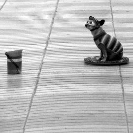 Doggie Tip Box by Rich Eginton - City,  Street & Park  Street Scenes ( tip box, costume, lines, las ramblas, dog, vertical lines, pwc )