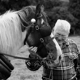 Two Old Boys by Sean Laffey - Animals Horses ( tipperary working horse, farm horse, horse and old man, irish carriage horse, irish cobb )
