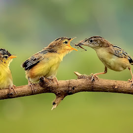 Three Birds by MazLoy Husada - Animals Birds