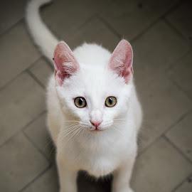 by Dragan Klapčić - Animals - Cats Kittens
