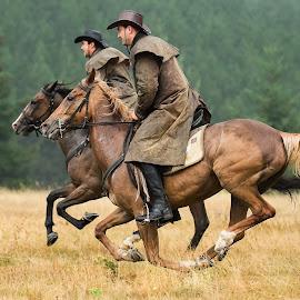 Horsemen by Dimitar Pavlov - Animals Horses ( horse, horsemen, bulgaria )
