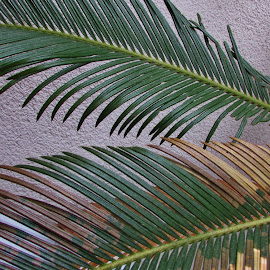 GREEN AND TAN POINTING LEFT by Terry Linton - Nature Up Close Other plants ( plant, spikes, nature, green, nature up close, ferns, tan, renewal, trees, forests, natural, scenic, relaxing, meditation, the mood factory, mood, emotions, jade, revive, inspirational, earthly )