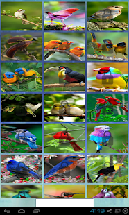 puzzle birds with nature - screenshot