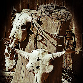 by Jeffrey Johnson - Novices Only Objects & Still Life ( buffalo, old, tree stump, old tree, rustic )