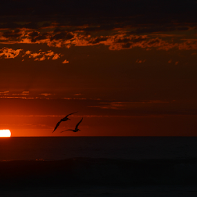 Atardecer de gaviotas by Alighieri Rizo - Landscapes Sunsets & Sunrises ( aver, sol, playa, mar, atardecer, gaviotas )
