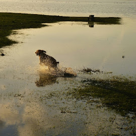 dog-conjuring lake by Abdul Haq Musa - Animals - Dogs Running