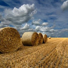 Balas redondas 6 by Eduardo Menendez Mejia - Landscapes Prairies, Meadows & Fields ( uk, redondas, paja, cambridgeshire, alpacas, menendez, eduardo, landscape, d5100, cambridge, inglaterra )