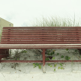 Sandy Bench  by Lauren Curtis - Artistic Objects Furniture ( sand, bench, grass, plants, beach, Chair, Chairs, Sitting )