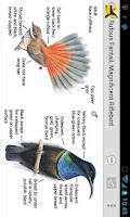 Screenshot of Morcombe's Birds of Aus (Lite)
