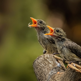 Call Their Mother by Roy Husada - Animals Birds