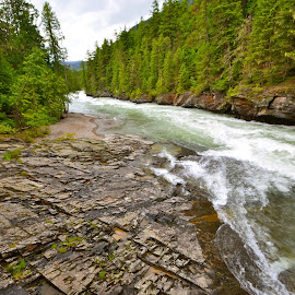 Flathead River, Glacier National Park by Greg Koehlmoos - Landscapes Forests ( beautiful wild river, montana, western montana, flathead river, glacier national park )