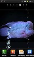 Screenshot of Aquarium Flowerhorn LWP