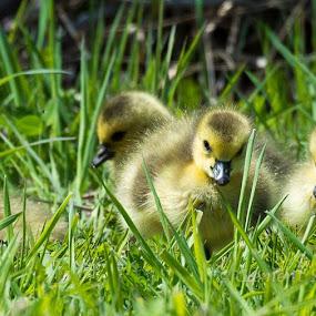 © Clement Stevens Photography by Clement Stevens - Animals Birds (  )