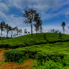 Tea Estate by Joydeep Bhattacharya - Landscapes Mountains & Hills ( wayanad, lanscape, kerala, south india, tea, tea estate )