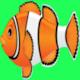 run fish