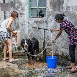 Wash Day by Vibeke Friis - Animals - Dogs Playing ( dog wash, women )