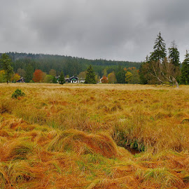 Autumn, Marienbad by David Solodar - Landscapes Travel ( park, tree, ма́рианске-ла́зне, autumn, czech, marienbad )