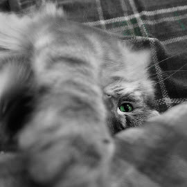Green Eyed Monster by Stuart Gallagher - Animals - Cats Playing ( playing, cats, animals, pets, paws, feline )