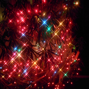 Twinkling of Colors by Liz Pascal - Public Holidays Christmas