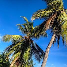 gOod eVening by Shlàsh Kànnà - Nature Up Close Trees & Bushes ( home, batty, coconut_tree, blue, sky, sweet )