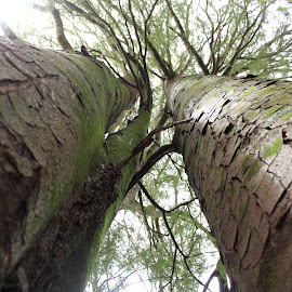 Reaching for the Sky by Elayne Hand - Nature Up Close Trees & Bushes ( sky, nature, trees, leaves, branches,  )
