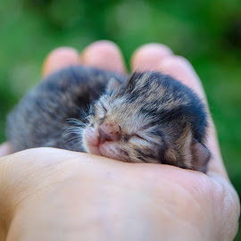 Sweet by Stefania Loriga - Animals - Cats Kittens