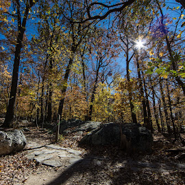 Sugarloaf Mountain Trail by Mark McLaughlin - Landscapes Forests