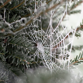 Frosty Day by Dunstan Vavasour - Nature Up Close Other Natural Objects (  )