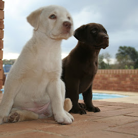Salt and pepper by Kevin Cook - Animals - Dogs Puppies