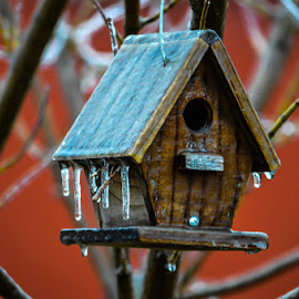 Bird house survives the Ice Storm  by Greg Sommer - News & Events Weather & Storms