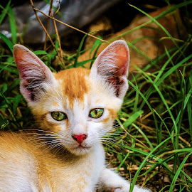 Kitty in the bush by Santanu Chandra - Animals - Cats Kittens