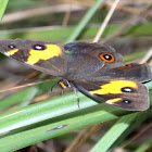 Sword Grass Brown