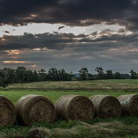 Caledonia Hay Field by Michael Prince - Landscapes Prairies, Meadows & Fields ( field, hay, sunrise )