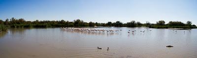 flamants au parc ornithologique