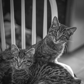 did you called me.. by Pragadeeswaran Periasamy - Animals - Cats Kittens ( black and white cat, cats, monochrome, pets, kittens )