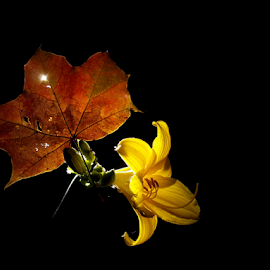 *** by Jurijs Ratanins - Instagram & Mobile Android ( mobilography, leave, nature, light, flower )