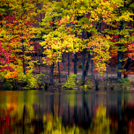 by Sue Duq - Nature Up Close Trees & Bushes