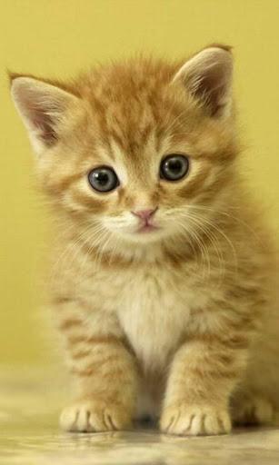 Kittens HD LWP Full