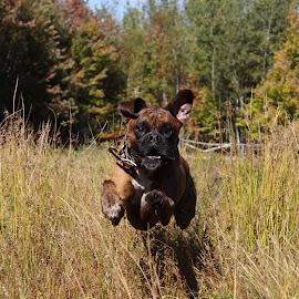 Fast by Kristy Allen - Animals - Dogs Running