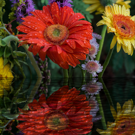 Flowers and Their Reflections by Michael Moriarty - Digital Art Things ( plant, reflection, red, nature, digital art, plants, yellow, flowers, reflecting, floral )
